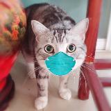Dr.cat